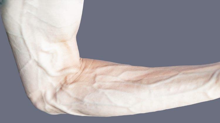 Vascular male forearms
