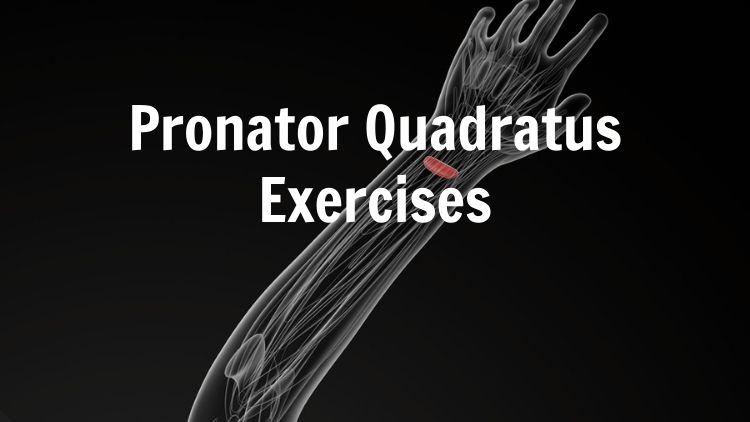 Illustration showing the pronator quadratus muscle