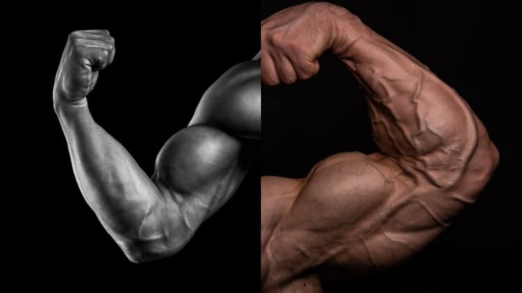 A pair of flexed biceps