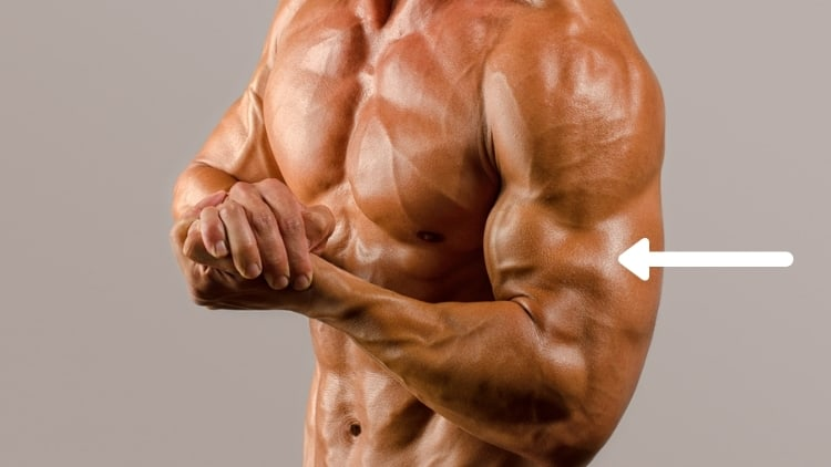 Bodybuilder flexing his arm