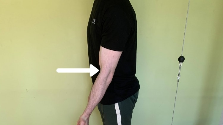 A muscular brachioradialis and bicep