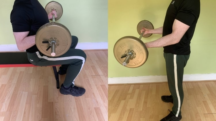 A comparison of the seated barbell curl and the standing version