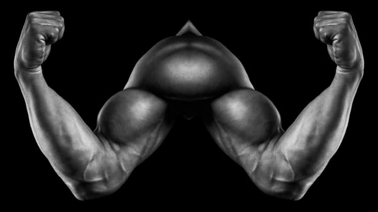 A pair of symmetrical biceps muscles