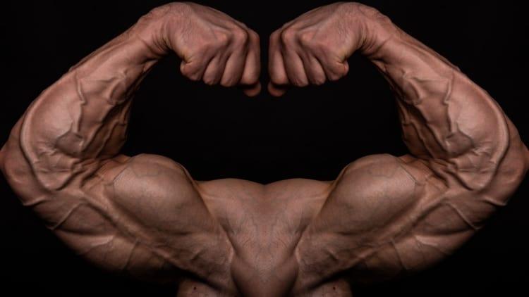A pair of symmetrical biceps