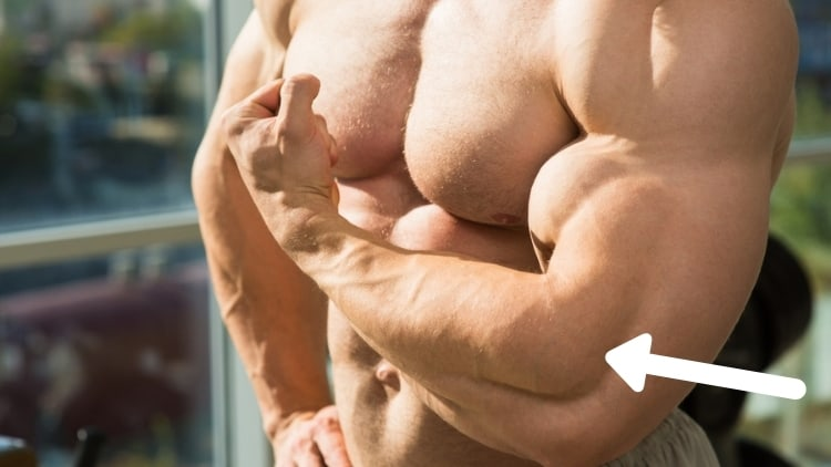 The well-developed arm muscles of a bodybuilder