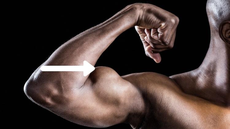A man's peaked biceps