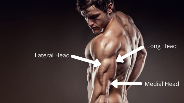 A man showing the three heads of the triceps brachii muscle