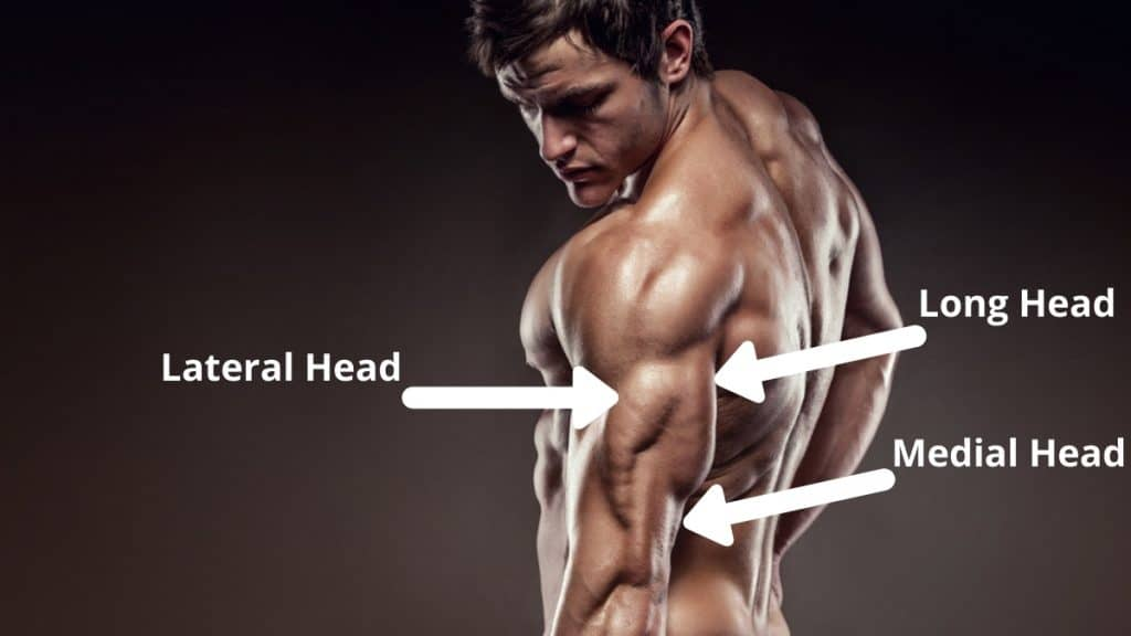A fitness model demonstrating the muscles worked in an overhead cable tricep extension